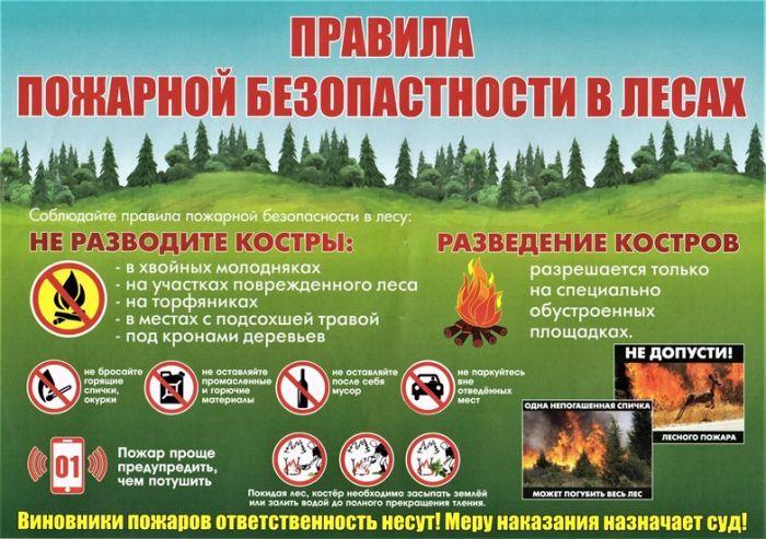лес пожар 4
